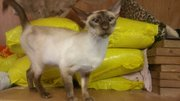 kitten looking for loving new home to live